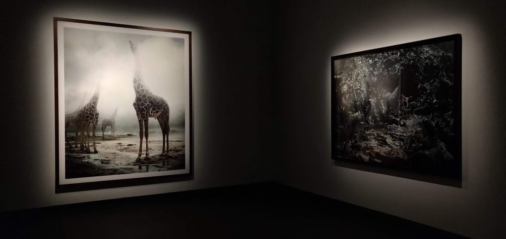 Simen Johan Until the Kingdom Comes